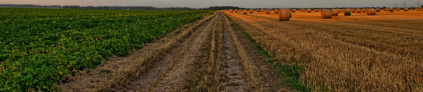 Desarrollo Rural30%-01